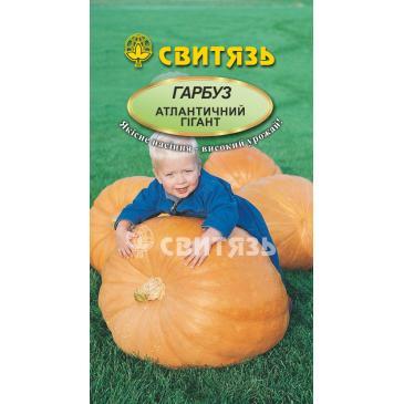 Гарбуз овочевий Атлантичний гігант, 7 нас. фото 1