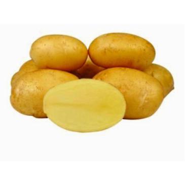 Картопля насіннєва Мелоді, 2 кг фото 1