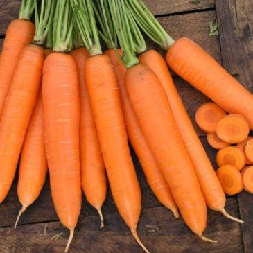 Морква столова середня Сіркана F1, 400 нас. СЦ фото 1