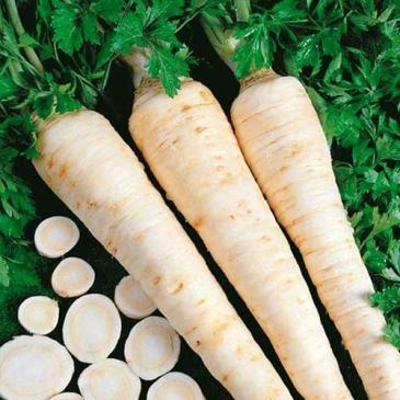 Петрушка коренева Ігл, 0,5 г СЦ фото 1