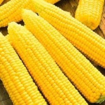 Кукурудза цукрова Трофі F1, 20 нас. фото 1