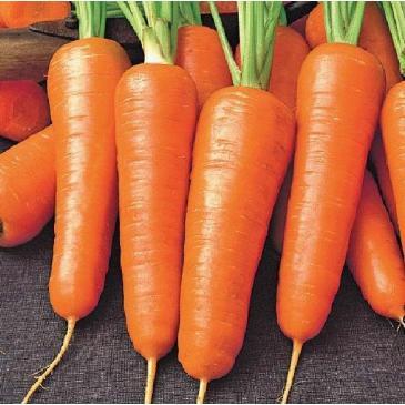 Морковь столовая раннеспелая Роял Шансон, 1 г фото 1