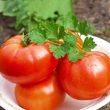 Томат низкорослый (детерминантный) Полбиг F1, 0,05 г фото 1