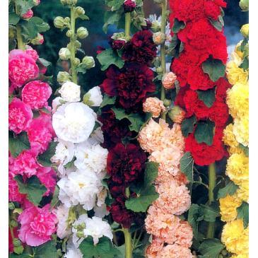 Мальва садовая MIX, 1 корн. фото 1