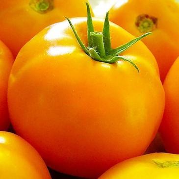 Семена Томат высокорослый (индетерминантный) Золотая королева,  0,2 г фото 1