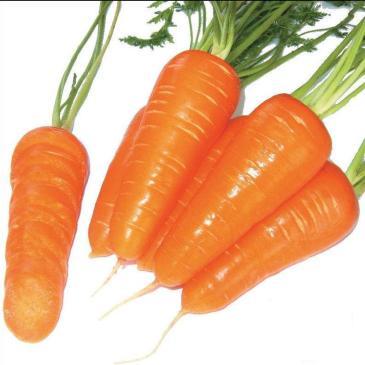 Морковь столовая среднеранняя Шантане Ред Корет, 400 сем. фото 1