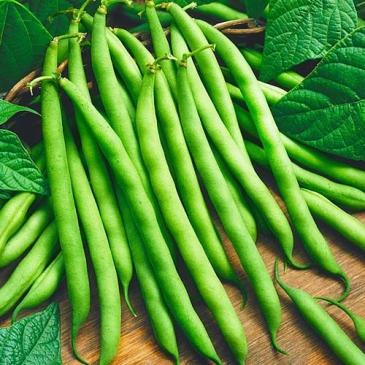 Фасоль спаржевая кустовая Серенгети, 20 сем. фото 1
