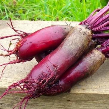 Семена Свекла столовая Карилон, 200 сем. фото 1
