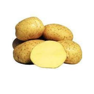 Картопля насіннєва Рів'єра, 2 кг фото 1