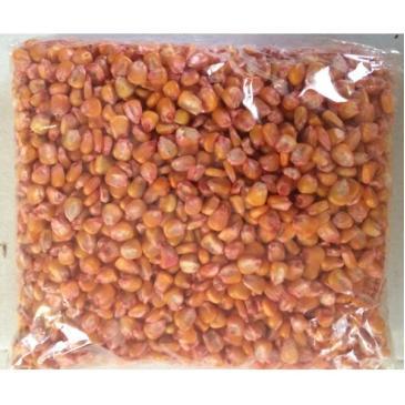 Кукурудза кормова Кінський Зуб 1кг фото 1