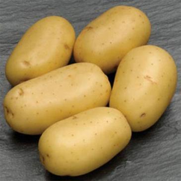 Картопля Карера 2 кг фото 1