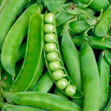 Горох овочевий Тіара, 20 г фото 1