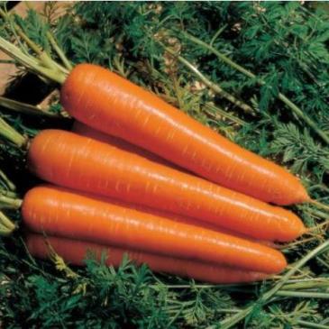 Семена Морковь столовая раннеспелая Нантес, 20 г фото 1
