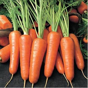 Морковь столовая раннеспелая Абако, 1 г фото 1