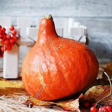 Гарбуз овочевий Кендісвіт, 8 нас. фото 1