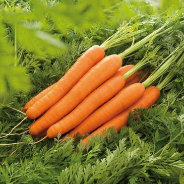 Морковь столовая раннеспелая Лагуна F1, 400 сем. фото 1